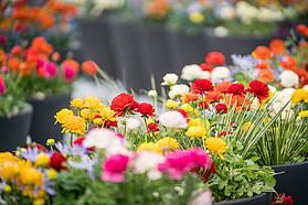 Verschiedene Blumen auf dem IGA Gelände